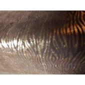 Skóra naturalna kaletnicza wzór - skory naturalne kaletnicze w Leather-design.eu